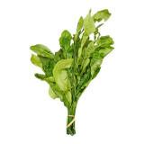 Citron Leaf 1 bundle